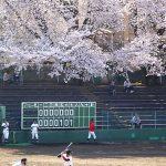 まちだのさくら2015@町田市民球場