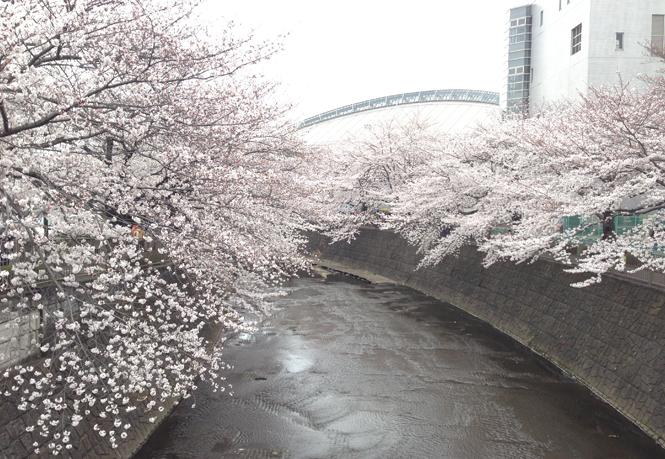 成瀬中央橋